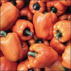 Pepper, Orange Bell Catalog #1044 (Capsicum annuum) The best tasting orange bell pepper we have grown. Given to SSE by member Alex Heklar in...