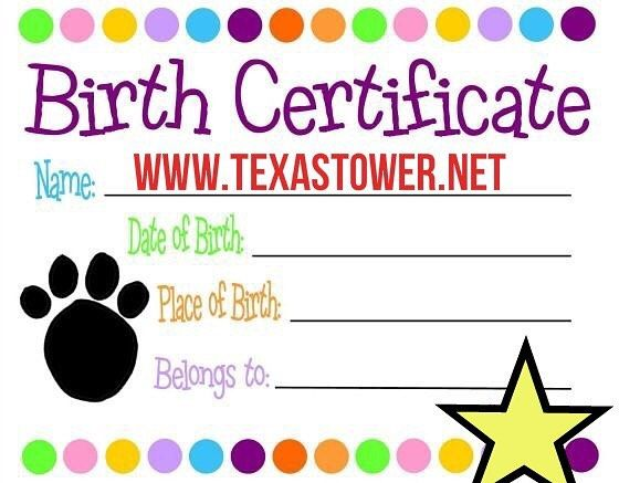 Best 25+ Certified birth certificate ideas on Pinterest - happy birthday certificate templates