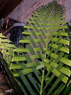 Sweetpea's: Palm Weaver