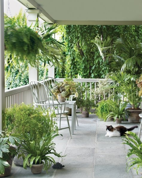 Greenery on your porch is a great way to bring the outdoors closer, but not all the way in.