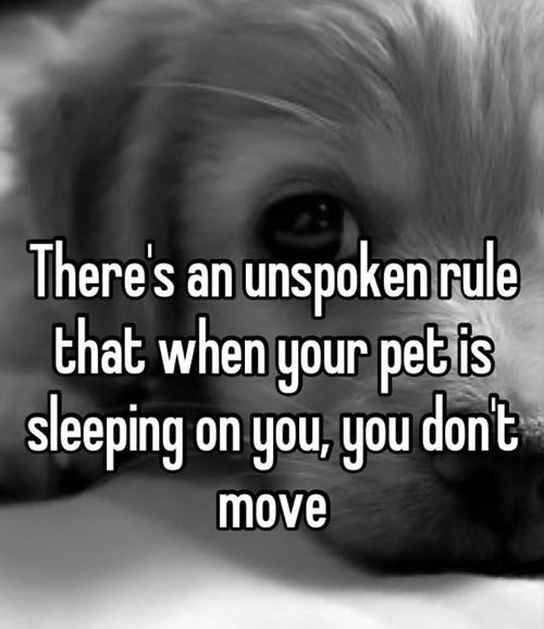 It is unfortunate but this is true. No matter how much you need to pee you WILL stay as you are for your pet's comfort.