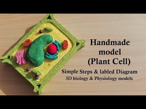 Simple Easy Plant Cell Thermocol Styrofoam Model Tutorial