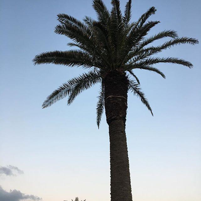 【etsuetsuetsu_ko】さんのInstagramをピンしています。 《市民薄明の始まり✨  朝活始めてから、お酒の量が減りました。  長年夜遊びばっかりしてきたけど、人って変わるな〜。 朝気持ちいい💜  #palmtree  #sunrise  #scenery #sky  #nofilter  #followme  #instagood  #instalike #beachcombing  #朝焼け #市民薄明 #朝活 #風景 #海 #いつも早朝始発組  #長潮 #結局ランチビール #意味がない》