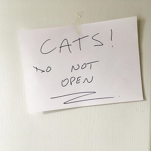 Most important instruction to the movers.... and the cats for that matter!