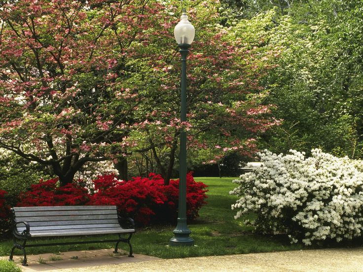 Image detail for -Central Park in Spring Season - Free Wallpapers - #31396