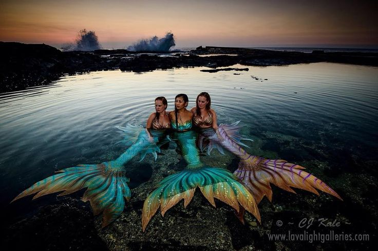 Finfolk Productions: We have had an absolutely breathtakingly wonderful week with Syrena- Singapore's First Mermaid! We can't wait to share more out our adventures with you. Photo by CJ Kale.