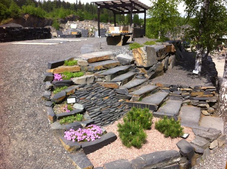 Kivikkokasvien kukinta on aluillaan. Pengerrys Viinijärven Kiven louhoksen myyntinäyttelyssä.