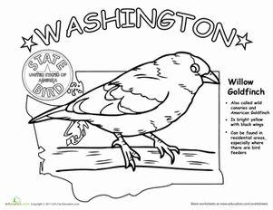 Washington State Bird Washington