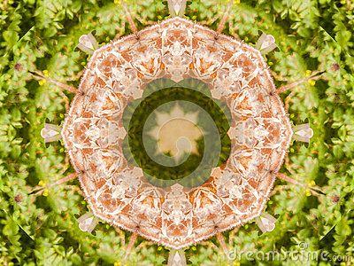 Circular shape color giraffe  themed abstract
