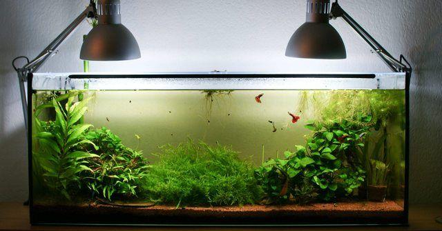 49 best aquascape images on pinterest fish aquariums for Fish tank ice method