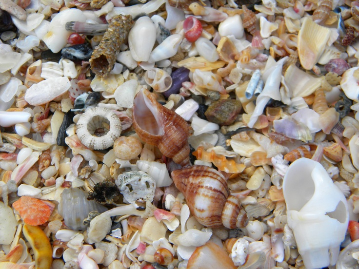 Shells on the beach at Jeffreys Bay, Eastern Cape - South Africa.