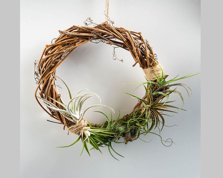 Tillandsia Wreath #Tillandsia #Airplants #Tropical #Forest #Collection
