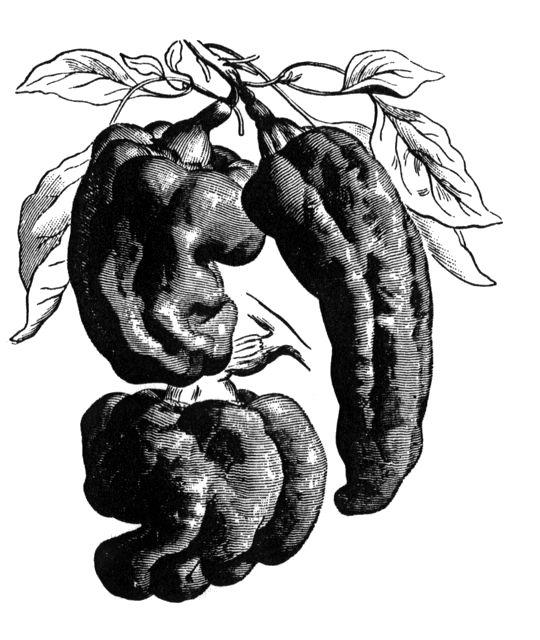 Runåbergs fröer - Paprika