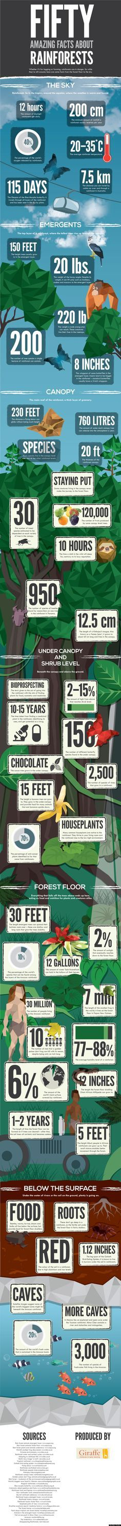 """According to the National Geographic, rainforests could vanish from the planet completely within the next century if current deforestation rates continue.""""   Here's a really cool infographic that illustrates the many, many reasons why we can't let that happen:"""