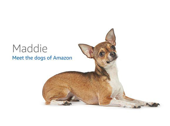 Dogs of Amazon