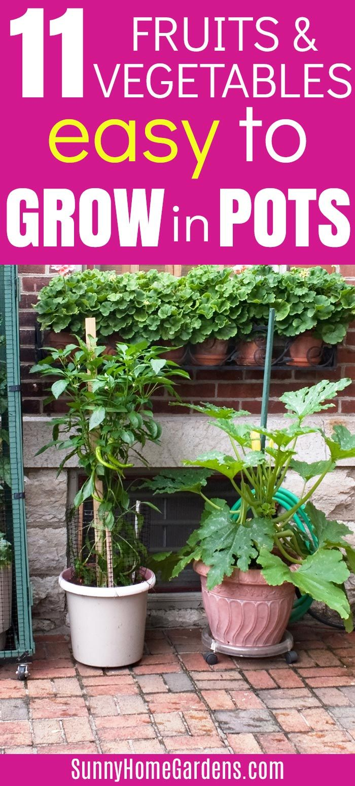 11 Easy Fruits And Vegetables To Grow In Pots Fruit Trees In Containers Growing Vegetables Growing Vegetables In Containers