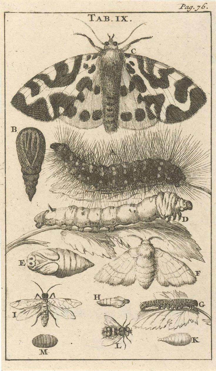 Rupsen, poppen en vlinders IX, Jan Luyken, Jan Claesz ten Hoorn, 1680