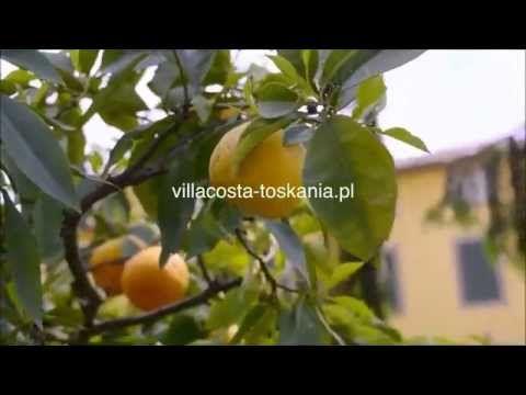 Villa Costa, Lucca, Toskania. Noclegi, apartamenty i wille na wakacje