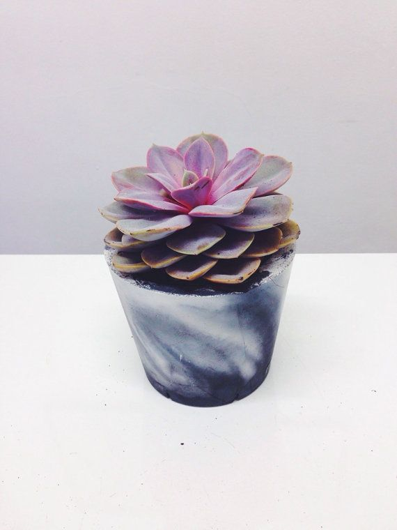 Medium sized marbled cement pots / planters for by sortlondon