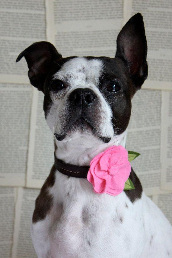 Cute dog collar ideas.  Great for photos!
