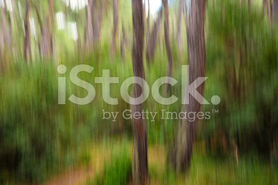 Abstract Blurry Green Forest royalty-free stock photo