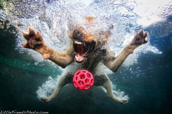 Dog Under water photography