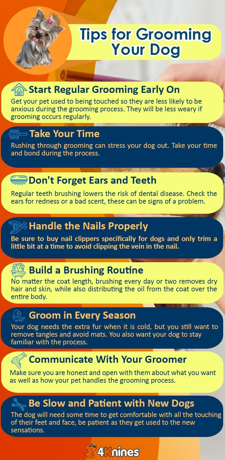 Top 10 Grooming Tips For New Dog Owners Dog Grooming Tips Dog