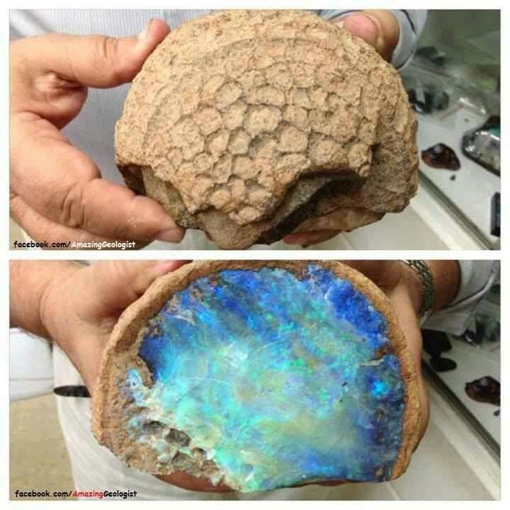 Opal fossil - simply amazing that something so plain on the outside holds such treasures within