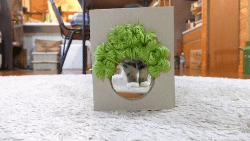 71 best Lustig images on Pinterest Funny pics, Kitty cats and Cats - rauchmelder in der küche