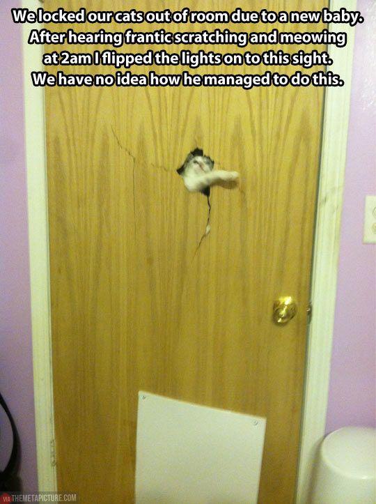 Heeere's kitty...
