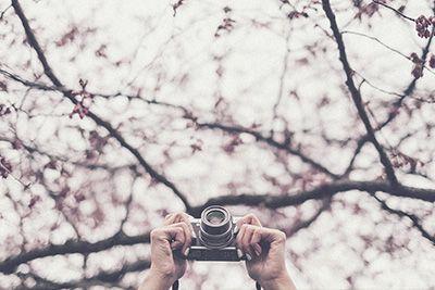 Fotografía, cursos de fotografia, escuela de fotografia, composición, cursos de fotografía online, escuela de fotografia online, photoshop, técnica fotográfica, fotografía de naturaleza, fotografía digital, retrato, still life, bodegón, edición fotográfica, texturas, retro, vintage, blanco y negro, retoque, proyecto fotográfico, ACR, adobe camera raw, aprender fotografía
