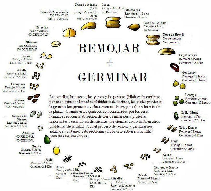 Lo que necesitas saber sobre las semillas Las semillas son POR LEJOS, los mejores alimentos vegetales que existen. Aquel vegetariano que no consume semillas regularmente, anda perdido por la vida. ¿Por qué? Porque las semillas tienen las mejores combinaciones de nutrientes. En términos generales todas las semillas son muy completas en minerales, (como el hierro, ...