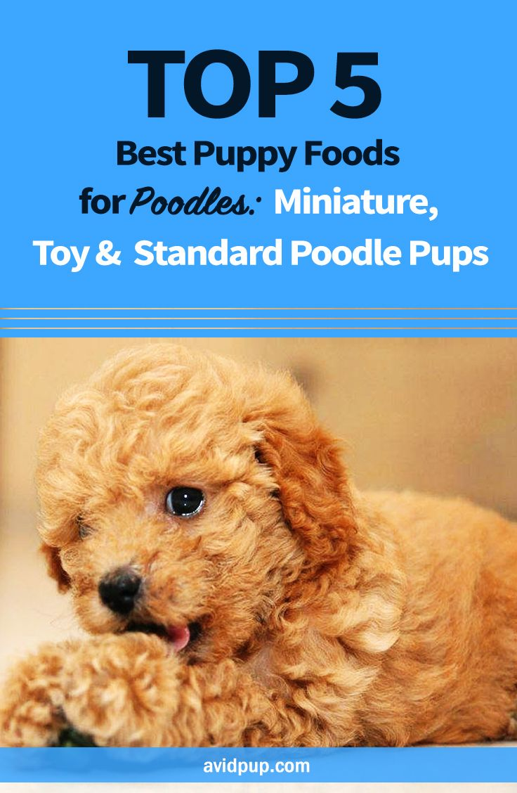 Top 5 Best Puppy Foods For Poodles Miniature Toy Standard