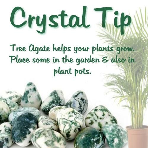 We'd also love to hear what crystals have helped your garden blossom - let us know! http://www.crystalage.com/search/index.cfm?sSearchString=tree+agate