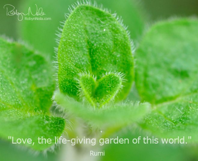 Hearts in Nature by Robyn Nola: Natural Quotes, Nature Quotes, Quotes Rumi, Coeur Quotes, Life Giv Gardens, Gardens Gates, Herbs Gardens, Lifegiv Gardens, Love Quotes