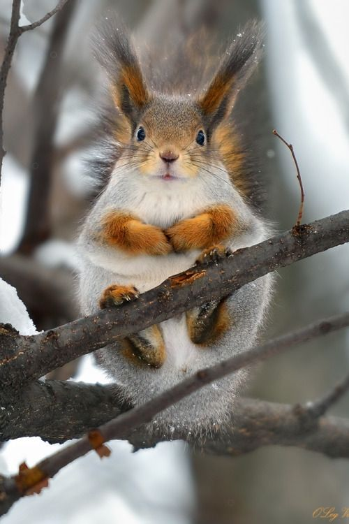 Resident of the forest takes in all sights & sounds of the Season - Oleg Vanilar via 500px