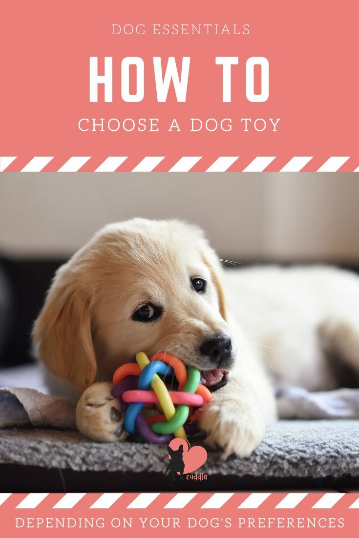 How To Choose A Dog Toy An Illustrated Guide Dogproducts