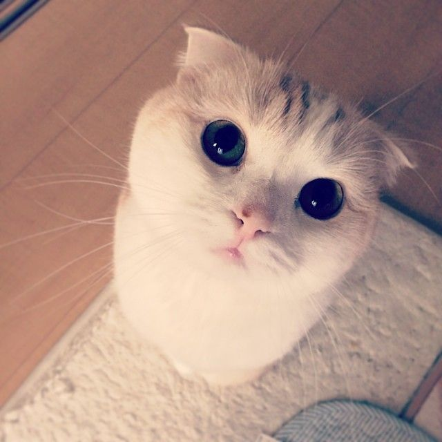 Best Lovely And Funny Cats Images On Pinterest - 35 cats pulling ridiculous faces imaginable