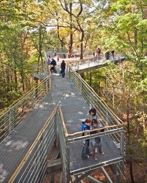 The Morris Arboretum of the University of Pennsylvania: See the forest from a new perspective from 50 feet up in the treetops on the Out on a Limb canopy walk, part of the Arboretum-wide interactive Tree Adventure exhibit.