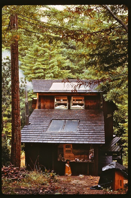 hillside cabin in the redwoods near mendocino ca cabin