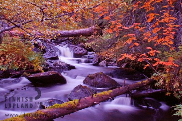 Autumn colors in Levi fell in Finnish Lapland. Photo by Levi Tourist Office. #filmlapland #arcticshooting #finlandlapland #filmlapland #lapland #river #stream #autumncolors