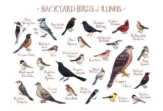 Illinois Backyard Birds Field Guide Art Print Watercolor Painting Print Birdwatching Wall Art Nature Print Bird Poster Backyard Birds Bird Poster Missouri Birds