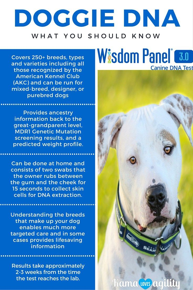 Is it worth it to do a dog DNA test? Yes! Find out the reasons why.  @wisdompanel #sponsored                                                                                                                                                                                 More