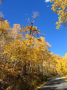 Pando (The Trembling Giant), Fishlake National Forest, Utah. This is a colony of a single Quaking Aspen whose root system is estimated to be 80,000 years old. (via Wikipedia)