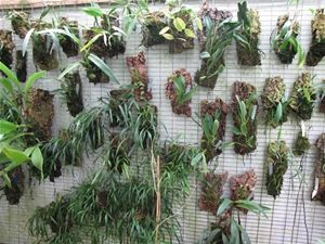 Mounted Orchids Hanging On Wire Mesh    Would Be Good In Tubular Form As  Well