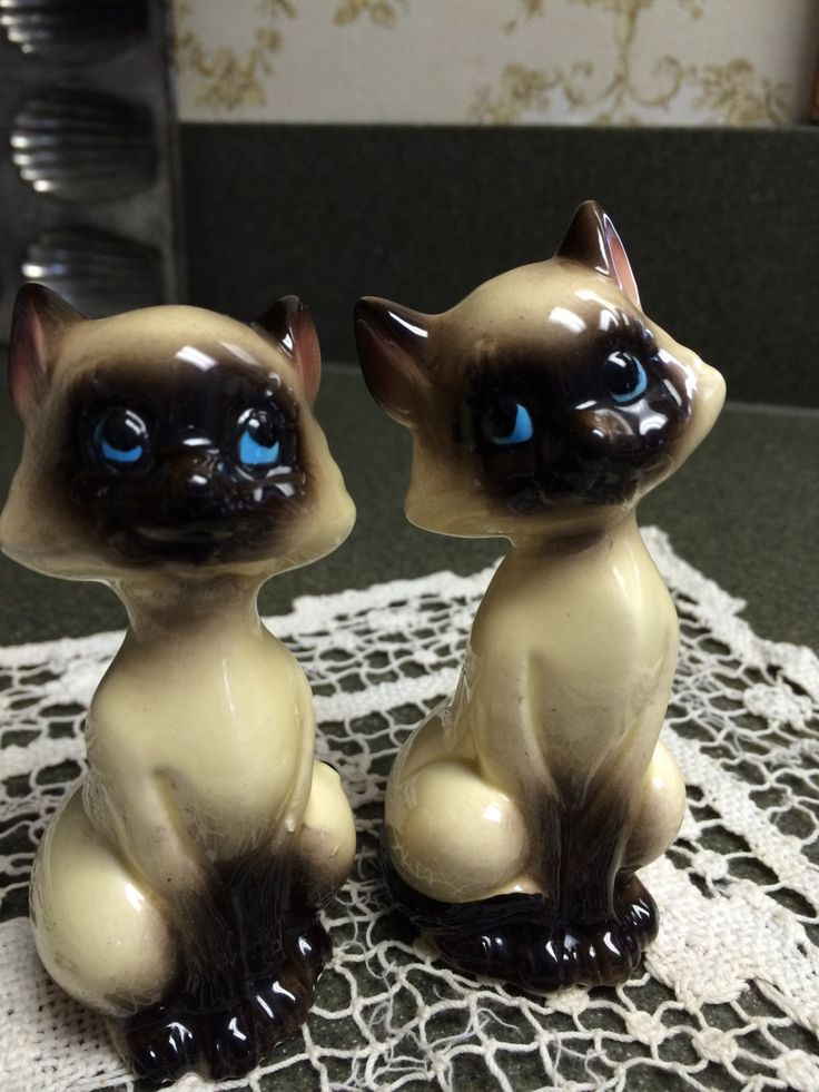 Siamese Cats Eyes Shake