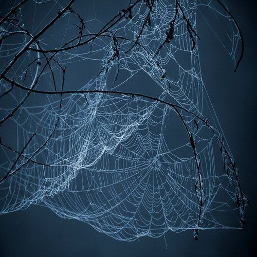 Nature's architect..i heard the spiders make some trippy webs when sprayed with psychedelic drugs