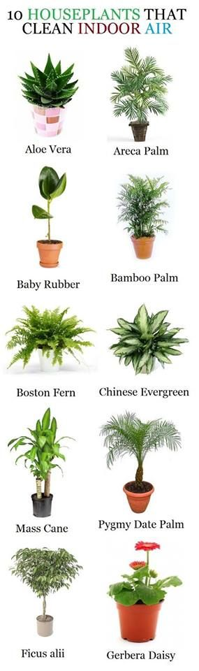House plants that help clean indoor air.  Do you have some of these at homes? Please SHARE to others
