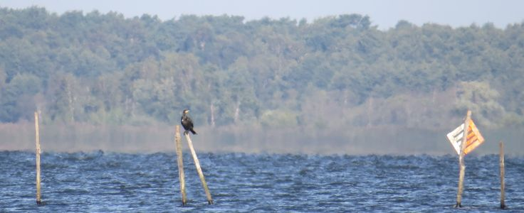 bird, stick and fishing net