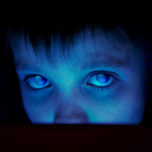 81 Best Images About Porcupine Tree On Pinterest Trees